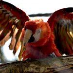 鳥類の骨格と筋肉|インコの飼い方