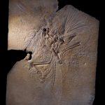 鳥類の身体の特徴|インコの飼い方