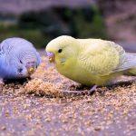 鳥類の嘴と後肢|インコの飼い方