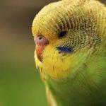 鳥類の五感|インコの飼い方