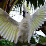 鳥類の羽毛について|インコの飼い方