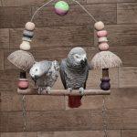 ヨウムのおもちゃの選び方|ヨウムの飼い方